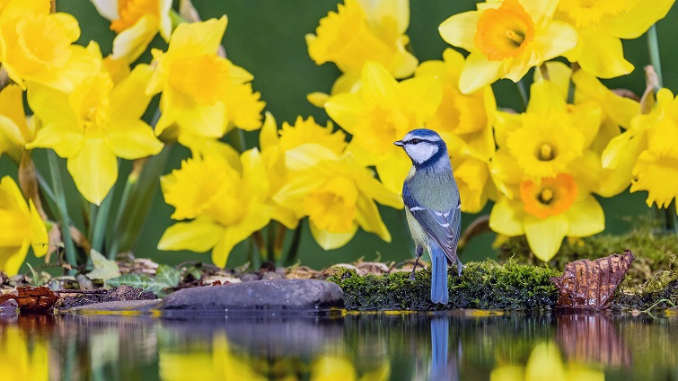 YellowNargesBird